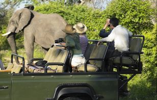Family on a safari looking at an elephant
